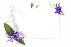 Malplaatje voor uitnodigingsontwerp met verse van de bloemclematissen en inkt contour Stock Fotografie