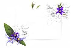 Malplaatje voor uitnodigingsontwerp met verse van de bloemclematissen en inkt contour Royalty-vrije Stock Afbeeldingen