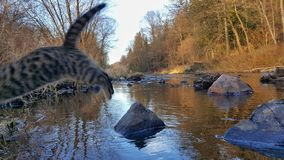 Malse River and the Jumping Cat. Malse River flow in South Bohemia, Czechia and a jumping tabby cat Royalty Free Stock Photos