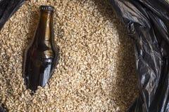 Malt ambre avec la bouteille, ingrédients de brassage de bière Image stock