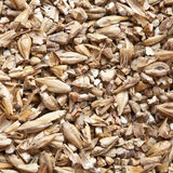 Malt as background. Malt an ingredient for beer Royalty Free Stock Images