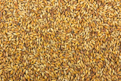 Malt background Royalty Free Stock Image