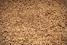 Malt background. Ingredient for beer Royalty Free Stock Photos