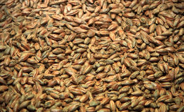Malt background. Ingredient for beer. Close up Stock Images