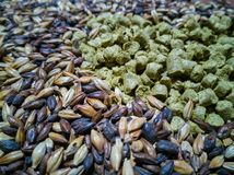 Malt and barley for craft beer manufacturing. On the table royalty free stock images