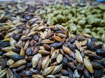 Malt and barley for craft beer manufacturing. On the table stock photography