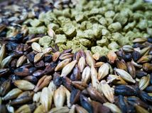Malt and barley for craft beer manufacturing. On the table royalty free stock photography