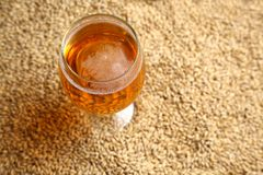 Malt and beer Stock Images