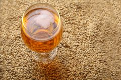 Malt and beer Royalty Free Stock Images