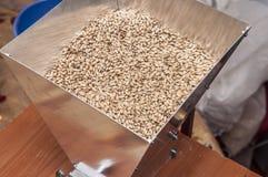 Malt. Beer malt in mill, macro Royalty Free Stock Photo