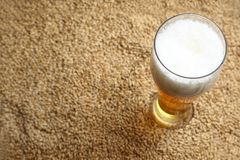 Malt and beer. Tall glass of light beer standing on barley malt grains stock photography