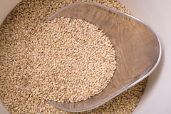 Malt in Bucket Royalty Free Stock Photo