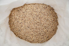 Malt grains. Beer production. Malt grains background. Ingredient for beer production Royalty Free Stock Image