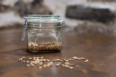 Malt grains. In a blurred foreground and a buckled glass of wheat malt in the background Royalty Free Stock Photo