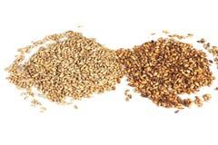 Malt grains. Close photo up of malt grains Royalty Free Stock Image