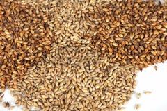 Malt grains Stock Image