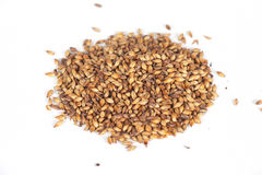 Malt grains Royalty Free Stock Photos