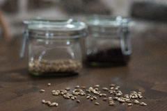 Malt grains. In a foreground and two buckled glass of chocolate malt and wheat malt in the blurred background Stock Photography