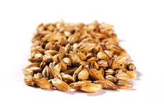 Malt grains. Ingredient to do beer Royalty Free Stock Photos