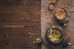 Malt grains in the pot isolated. Malt and hop in wooden pots on burlap cloth on brown wooden table background with copy space royalty free stock photography
