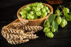 Malt and hops. Beer brewing ingredients Royalty Free Stock Photography