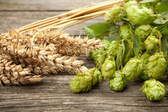 Malt and hops. Beer brewing ingredients Royalty Free Stock Images