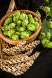 Malt and hops. Beer brewing ingredients Stock Photos