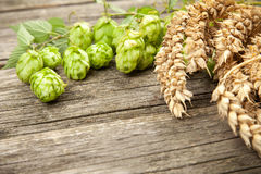 Malt and hops. Beer brewing ingredients Stock Photo