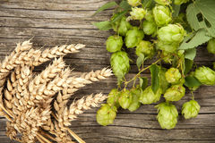 Malt and hops. Beer brewing ingredients Royalty Free Stock Photo