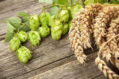 Malt and hops. Beer brewing ingredients Royalty Free Stock Image