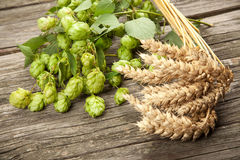 Malt and hops. Beer brewing ingredients Royalty Free Stock Photos