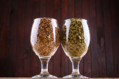 Malt and hops in glasses. Glasses full of malt and hops over a wooden backgound Royalty Free Stock Photos