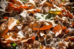 Malt i skogen som täckas med sidor och skogfrukter arkivbild