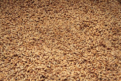 Malt Ingredient for beer. Malt background. Ingredient for beer Royalty Free Stock Photography