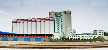 Malt Plant Royalty Free Stock Photos
