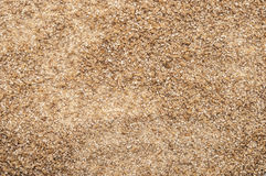 Malt. Roughly grind barley texture background Stock Photography