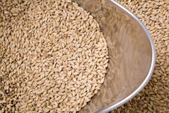 Malt in Scoop Stock Image