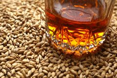 Malt and whiskey Royalty Free Stock Image