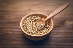 Malt grains in the pot isolated. Malt in wooden bowl with spoon on brown wooden table background stock photography