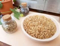 Malt for your beer or for your recipes. Dish with golden malt and spices for your beer or your recipes royalty free stock photography