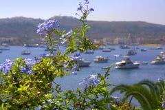 Malta. Blue sky, blue sea, blue flowers Royalty Free Stock Photos
