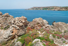 Malta - Coast Garrigue Steppe, Plaz Gnajn Tuffiena Bay, Stock Image