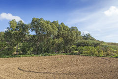 Malta Countryside. Typical agricultural landscape in Malta, with beautiful rich red soil and terraced fields Stock Image