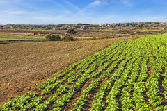 Malta Countryside. Typical agricultural landscape in Malta, with beautiful rich red soil and terraced fields Stock Photo