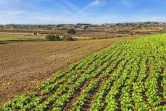 Malta Countryside Stock Photo