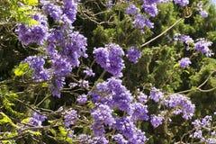 Malta La Valletta, blommor i stad parkerar Royaltyfria Foton