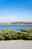 Malta lake. Small bushes in front of the Malta lake in Poznan, Poland Royalty Free Stock Photography