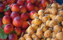 Malta Plums. A group of malta plums and apricots together at market place Stock Photo