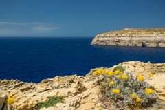 Malta shoreline cliffs. And flowers Stock Photos