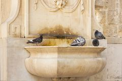 Malta, Valletta, Fountain at St John Co-cathedral. Malta, Valletta, piegons at the fountain at st John co-cathedral Stock Photos